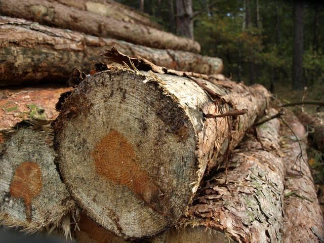 Open haard hout