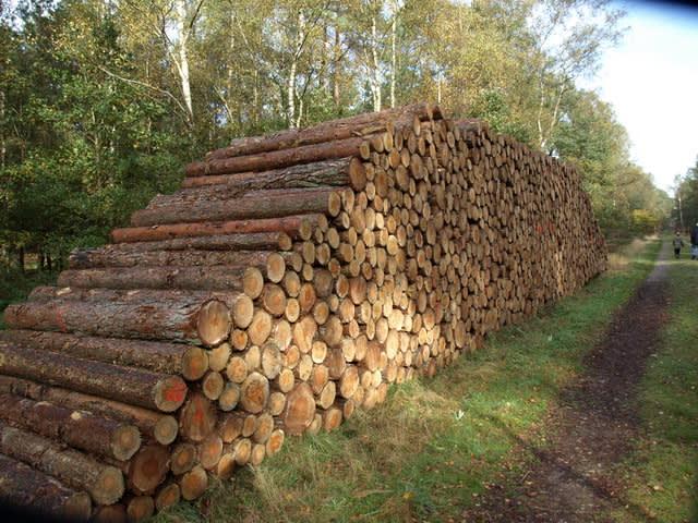 Het bos : een kleine onuitputtelijke energiebron